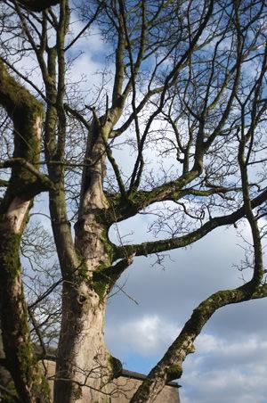 Fujifilm FinePix X100 Trees f/2.0