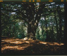 Fujifilm GF670 Professional - 6x7 format