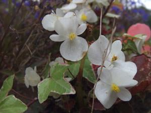 Fujifilm Real 3D W1 flowers