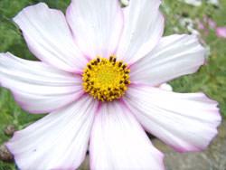 GE X5 macro flower