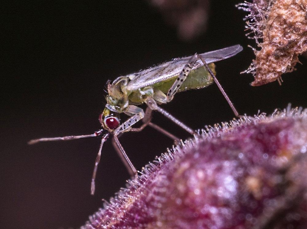 Hobbo macro fly