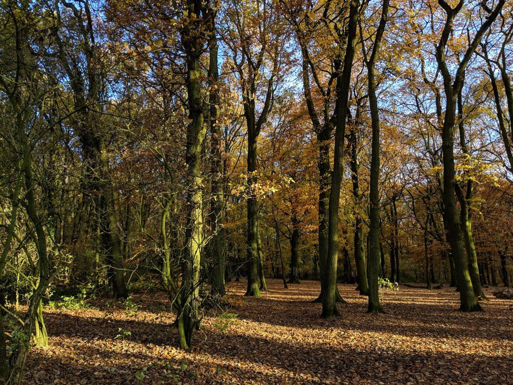Woods | 1/297 sec | f/1.8 | 4.4 mm | ISO 56