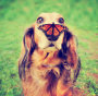 Thumbnail : Comedy Pet Photo Competition Launched