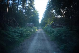 Holga lens with FEL-HLW - Path
