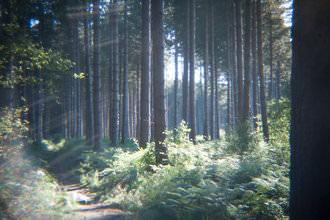 Holga lens - Flare