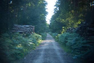 Holga lens - Path