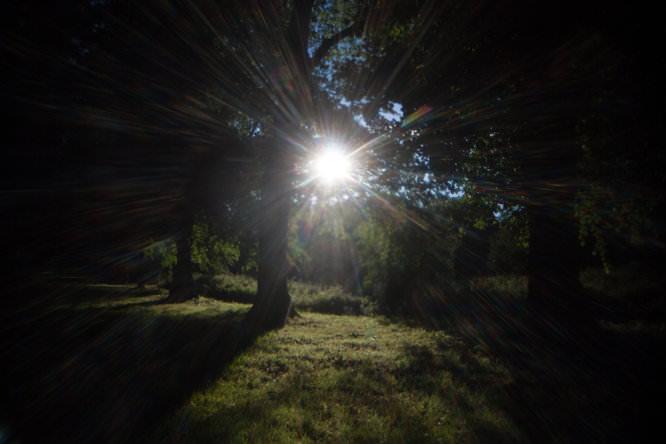Holga lens with FEL-HLW - Sunburst