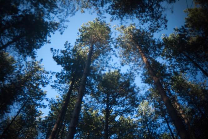 Holga lens with FEL-HLW - Trees