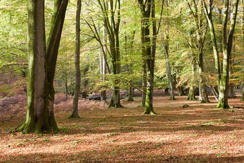 New Forest before adjustments