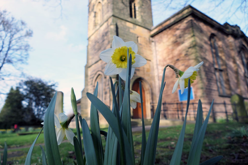 Photograph Daffodils