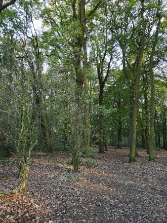 Trees | 1/50 sec | f/1.8 | 4.0 mm | ISO 160