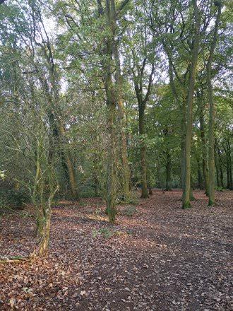 Woods | 1/100 sec | f/1.8 | 4.0 mm | ISO 400