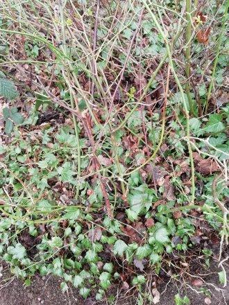 HDR Plants | 1/50 sec | f/2.2 | 3.5 mm | ISO 100