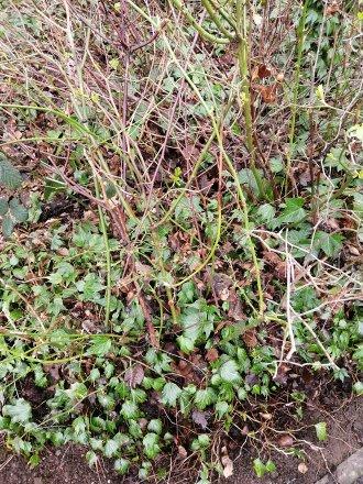 HDR Plants | 1/50 sec | f/1.8 | 3.6 mm | ISO 50