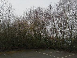 Trees | 1/646 sec | f/1.8 | 3.6 mm | ISO 50
