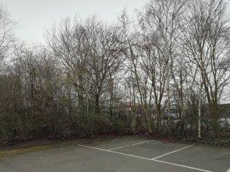 Trees | 1/193 sec | f/2.2 | 3.5 mm | ISO 50