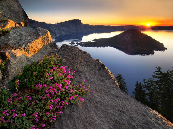 Penstemon sunrise