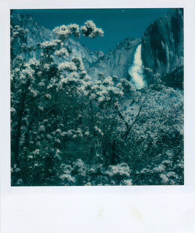 Ansel Adams, Yosemite Falls & Flowers 1979, 8 x 8 cm (3 1/4 x 3 1/4 in.) / WestLicht Collection