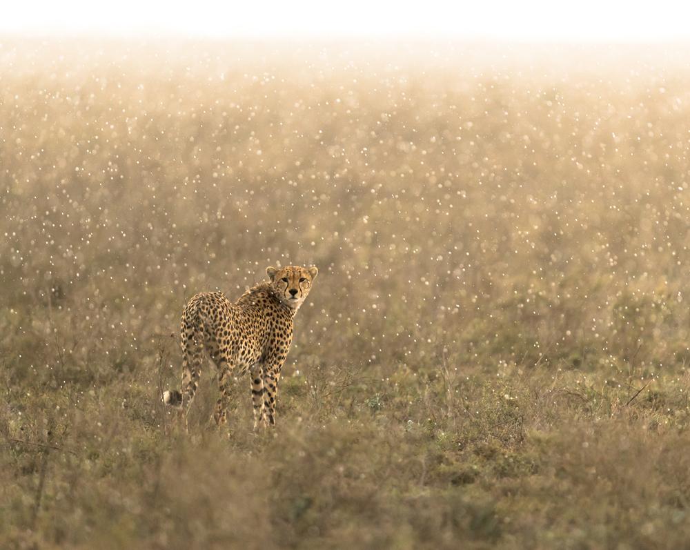 Wildlife Photographer George Turner Talks To ePHOTOzine