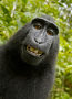 Thumbnail : Is The 'Monkey Vs Photographer' Copyright Tale Finally Over?