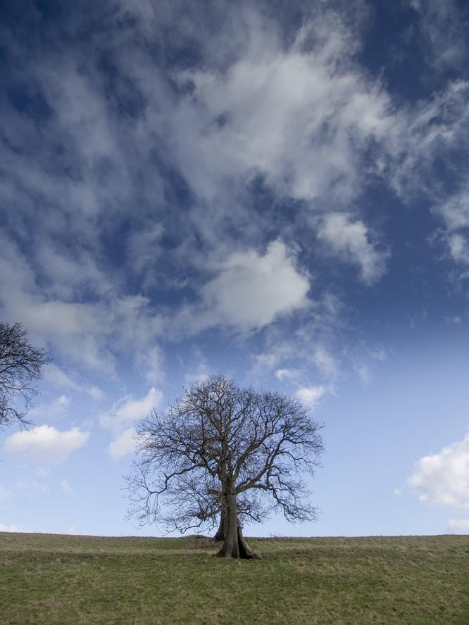 Seven5 Nd Grad Tree | 1/1000 sec | f/4.0 | 9.0 mm | ISO 200