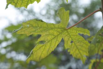 Lensbaby Spark Leaf | 1/100 sec | f/5.6 | 50.0 mm | ISO 320