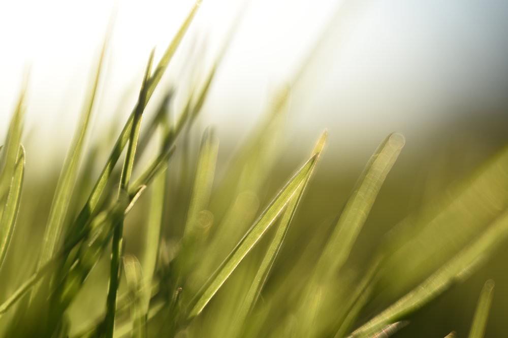 Macro Grass | 1/1000 sec | ISO 100