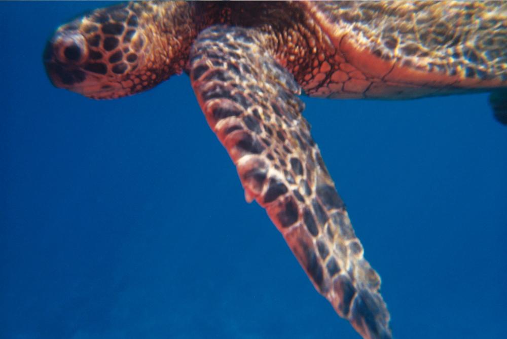 Image captured with the Analogue Aqua