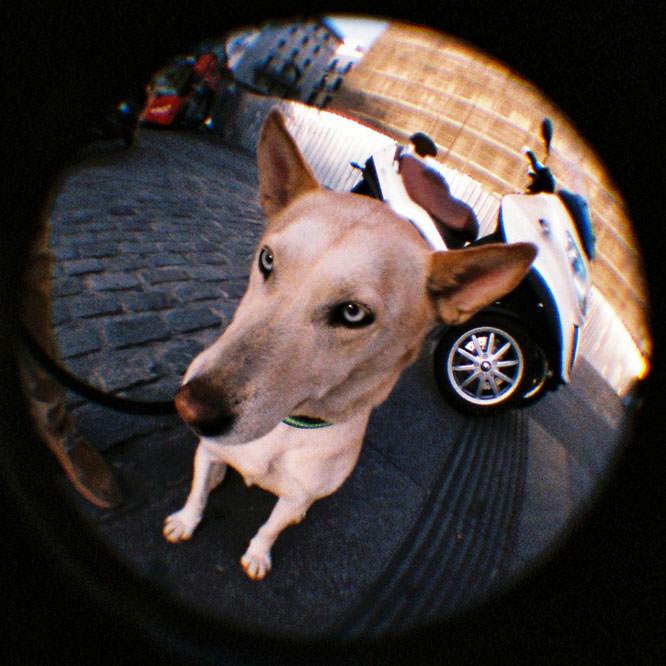 lomograpgy dog