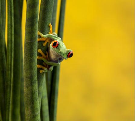 Wil Mijer frog