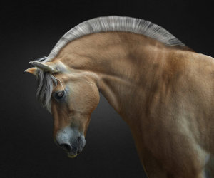 Majestic Portrait Of A Horse Wins 'Photo Of The Week' Accolade