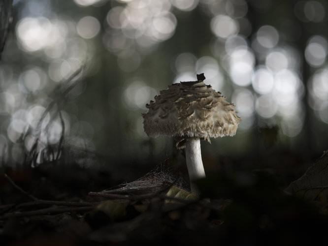 Manfrotto ML840H LED Light - Fungi | 1/160 sec | ISO 200