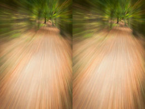 Master Zoom Burst Outdoor Photography Today With These Tips