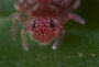 Thumbnail : Practical Tips For Insect Microphotography