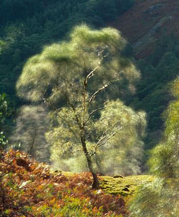 Tree multiple exposure shot
