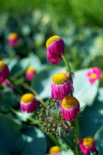 Nikon 50mm Flower