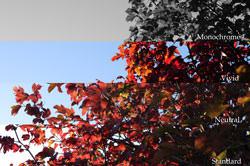 Nikon D300s DSLR colours