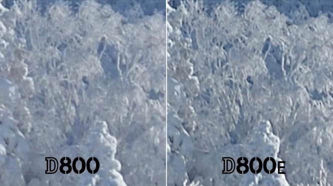 Nikon D800 D800E Crops