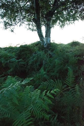 D800 Noise Tree | 1/50 sec | f/8.0 | 18.0 mm | ISO 25600