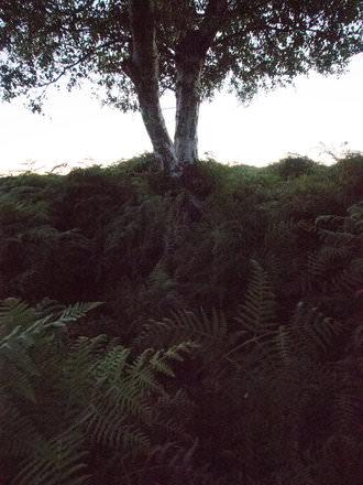 Omd Noise Tree | 1/80 sec | f/8.0 | 9.0 mm | ISO 25600