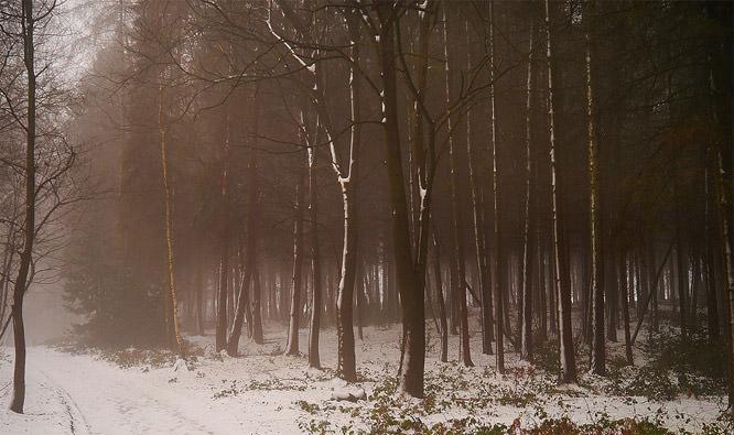 Winter's coat
