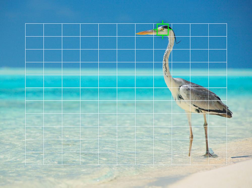 Olympus Bird Tracking Firmware