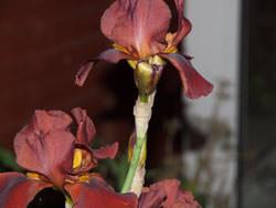 Olympus E620 Bronze Iris