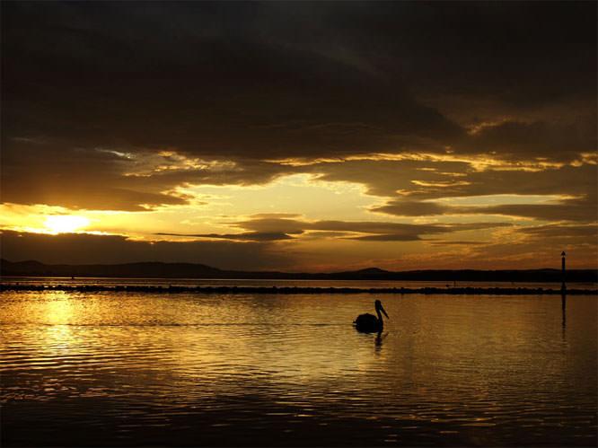 floating wildlife at sunset