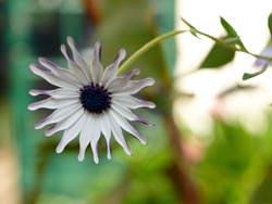Olympus Zuiko Digital 35mm f/3.5 Macro flower
