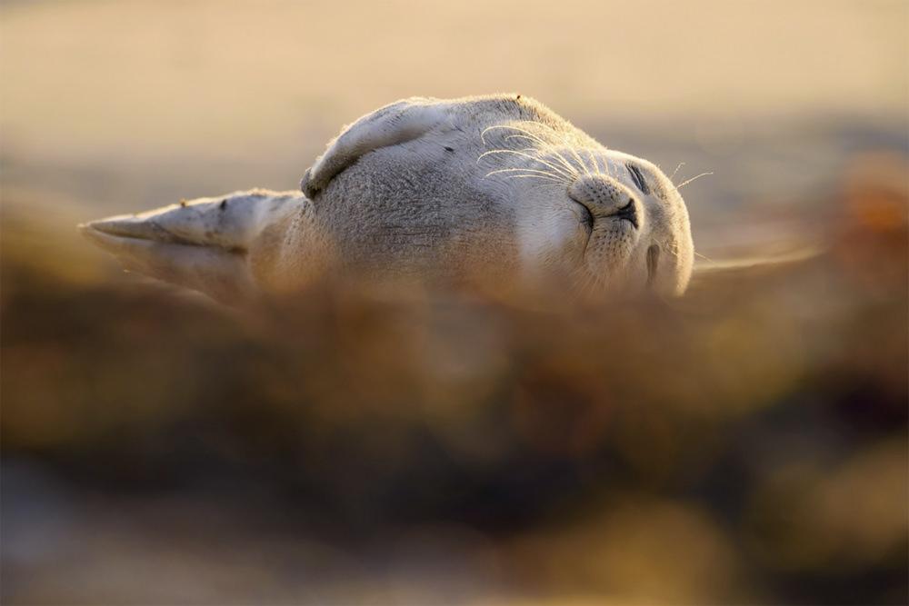 alexander seal
