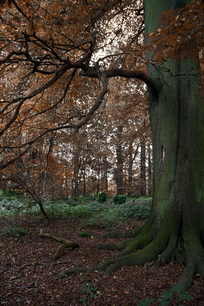 Woodland Autumn
