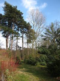 Canon Powershot S95 Trees