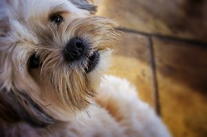 Perfect Your Pet Photography