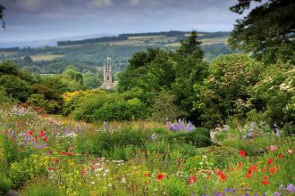 Museum Flower Meadow